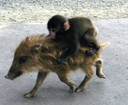 Baby Monkey Riding On A Dog Funny animals riding o...