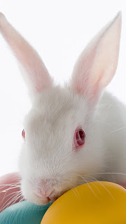 Free Download Easter Bunny iPhone 5 HD Wallpapers