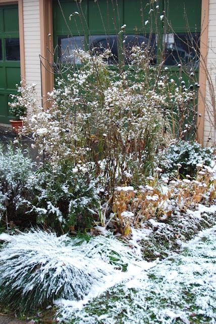 Driveway Garden in December.