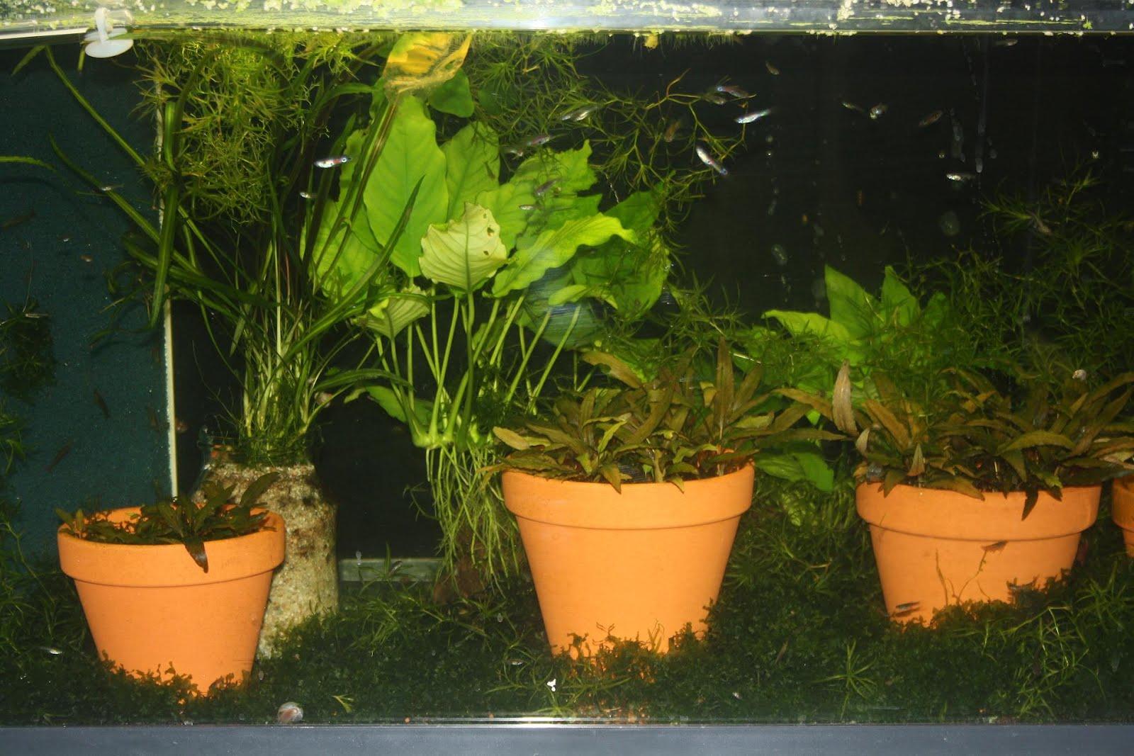 http://2.bp.blogspot.com/-j7qJyM-IPIM/T7p_R5j-apI/AAAAAAAABFY/Wu-qJYIZNwg/s1600/Tobago.JPG