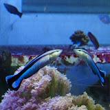 Το ψάρι που αναγνωρίζει τον εαυτό του στον καθρέπτη