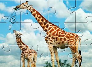 Puzzles de Girafa