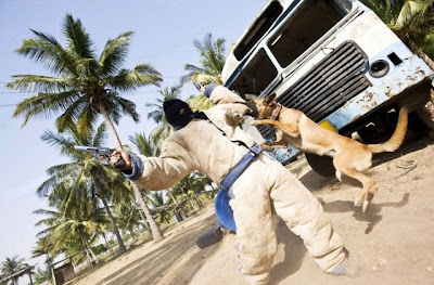 Canine Commandos Seen On www.coolpicturegallery.us