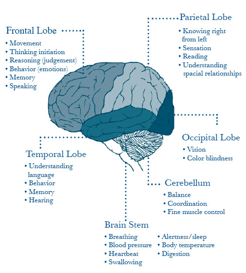 Brain jack image brain function brain function ccuart Image collections