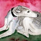 Whippet & Sighthound