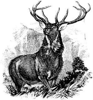 deer, etching, mountain, antlers, buck