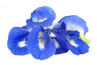Kembang Telang, kemabng Teleng, Bunga Biru, Bunga Talang, Bunga Temen raleng atau Terna Tea