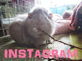 INSTAGRAM - klikkaa kuvaa!