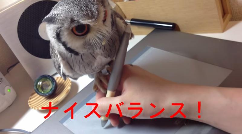 フクロウが絵を書いている時に手に乗っててカワイイ動画