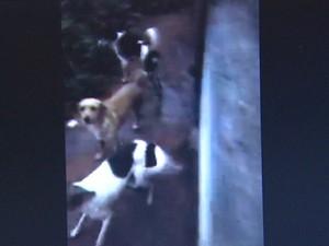 Cães ficam em meio ao esgosto em canil de Barrinha (Foto: Marisa Giraldeli/Arquivo Pessoal)