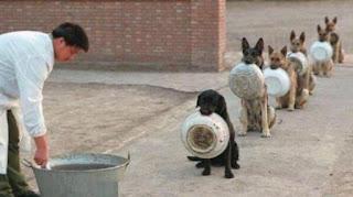 Aksi Disiplin Anjing China Saat Antre Makan