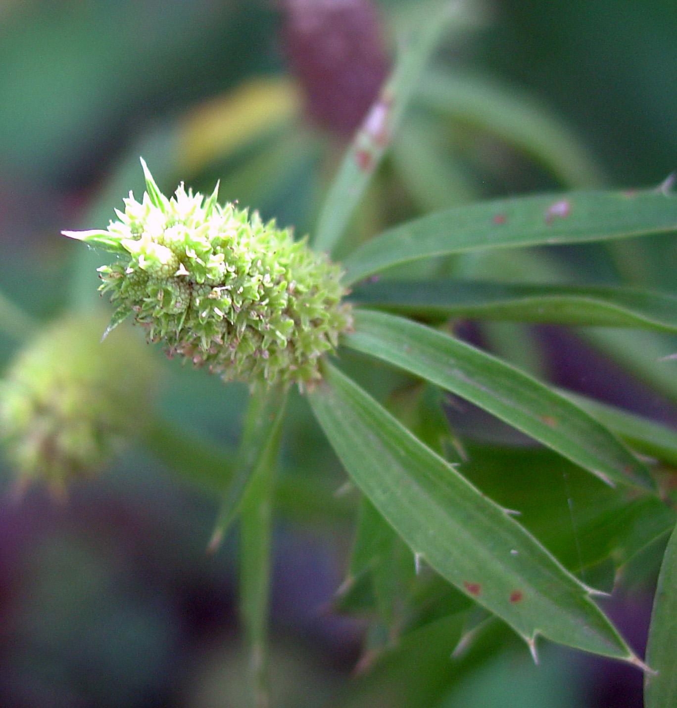 antiviral activity of medicinal plants pdf