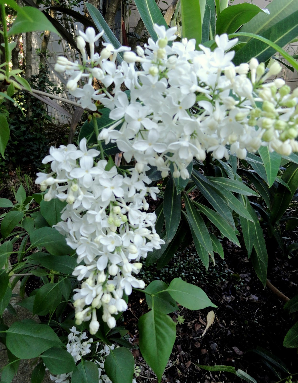 White Flowers Images And Names White Flower Names List Names Of