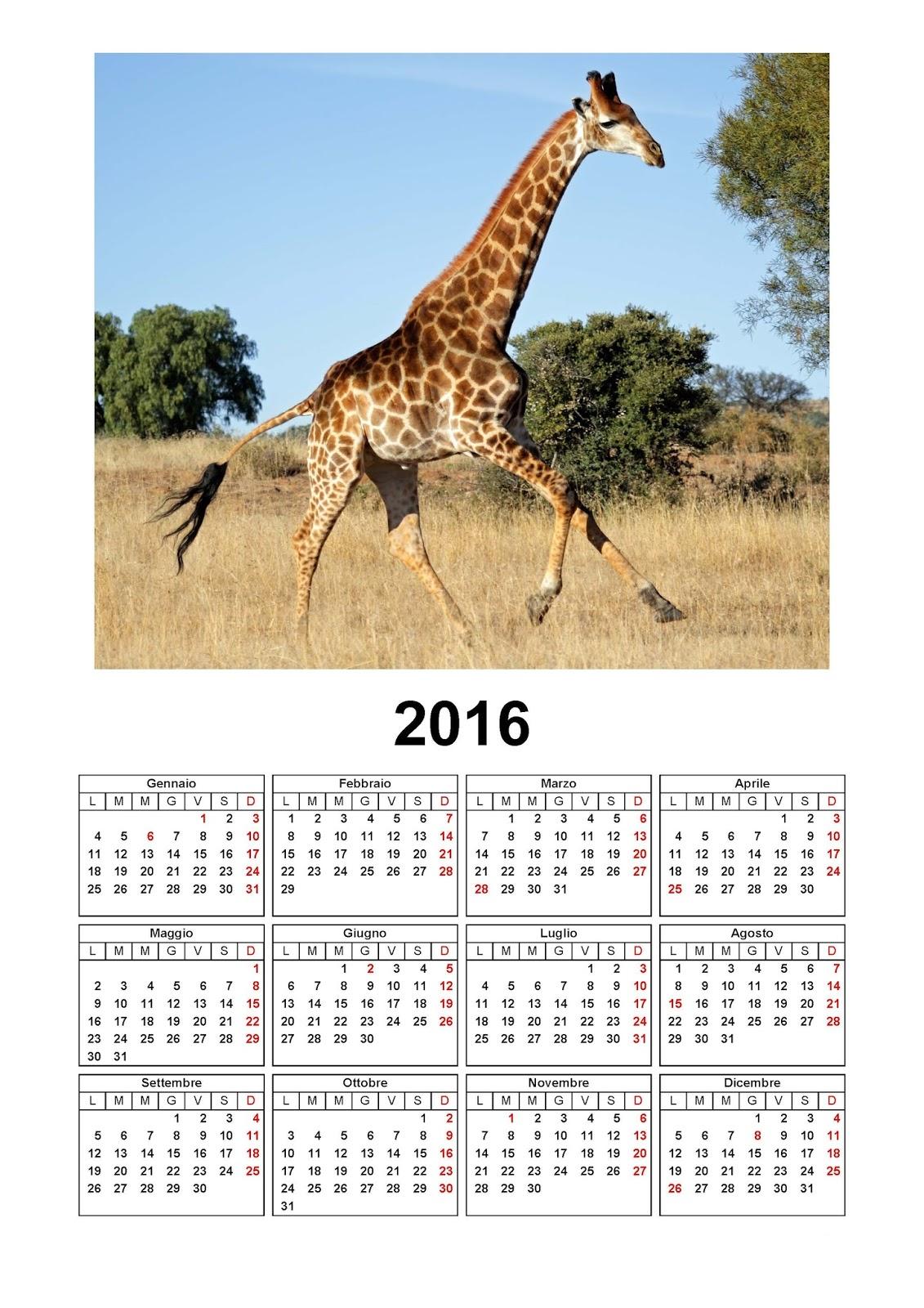 calendario 2016 - giraffa