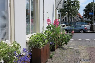 container garden, urban garden, pink, hollyhocks, Haafner