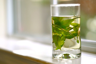 My French Cuisine: Lemon verbena tea