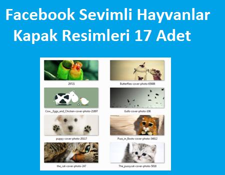 Facebook Sevimli Hayvanlar Kapak Resimleri 17 Adet