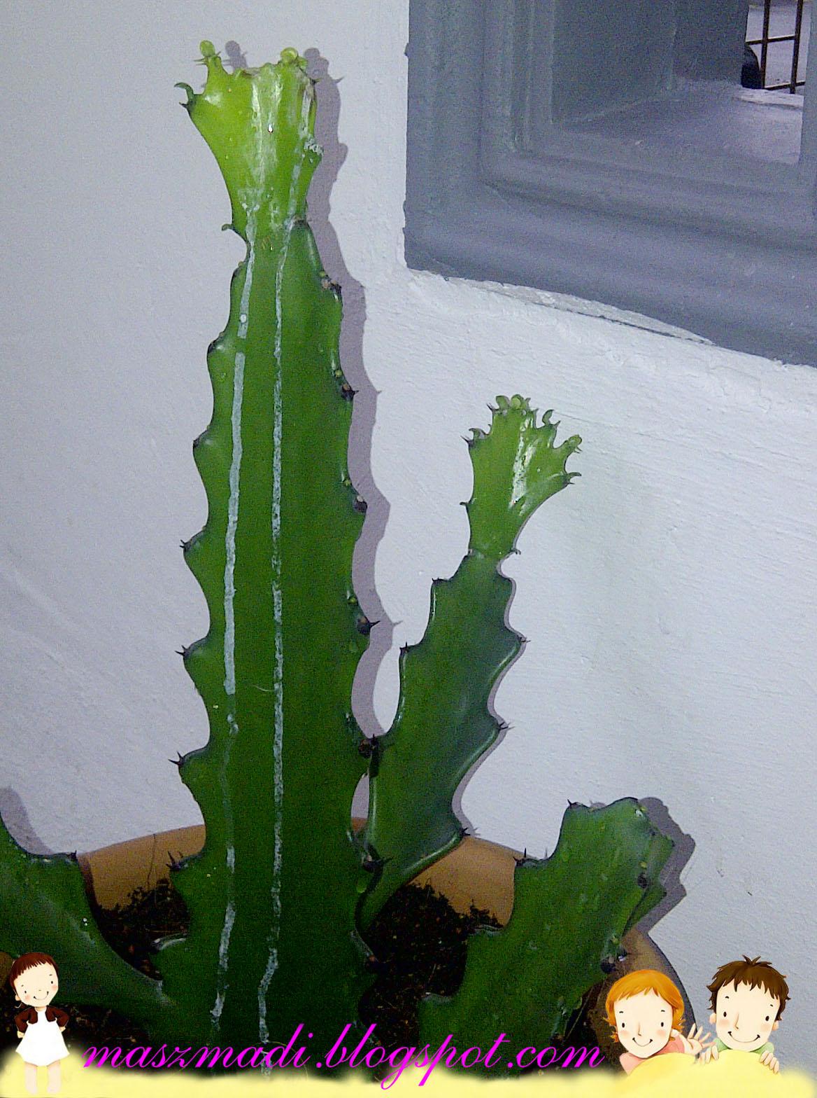 Cerita Pokok Kaktus Pemberian Mai Si Blogger Mama