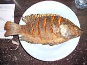 Thai Fish Dinner