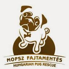 Mopsz fajtamentés - Hungarian pug rescue