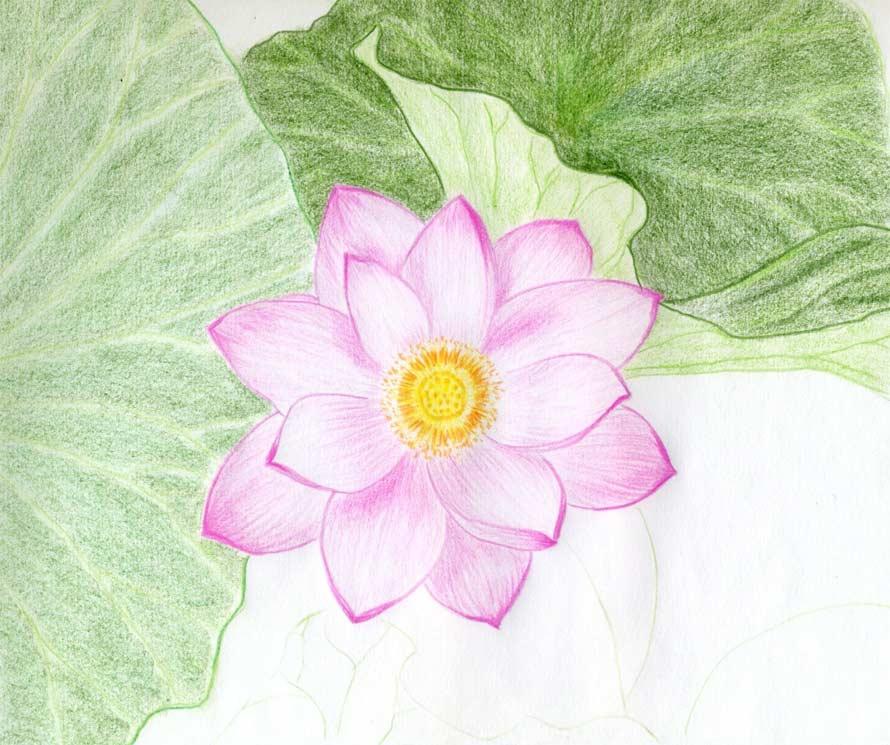 Lotus Flowers Drawings Step-by-Step Drawings:...