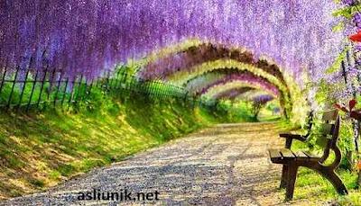 terowongan wisteria