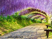 Terowongan Bunga Paling Indah di Jepang