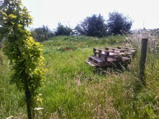 The bee plot before