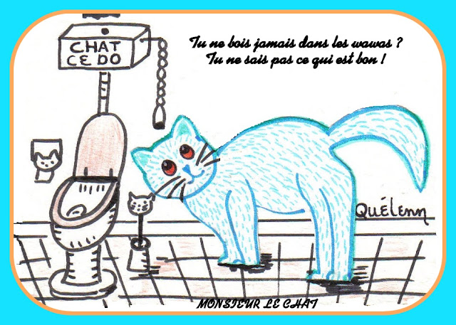 chats, toilettes