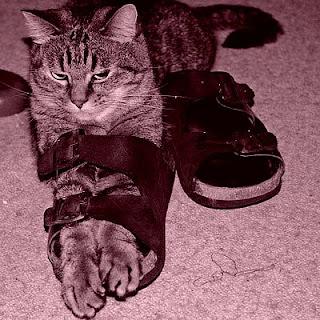 τα δυο πόδια σ' ένα παπούτσι