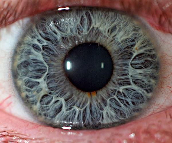 makro göz