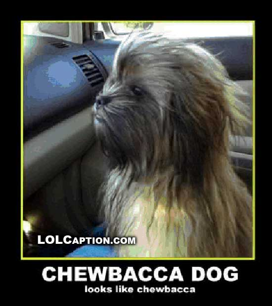 If Chewbacca Were A Dog What Type Of Dog Would He Be