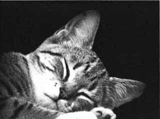 Come dormire meglio, rimedi per il sonno, come dormire bene la notte, come dormire subito, riuscire a dormire, rimedi per insonnia, cure e regole per un sonno profondo