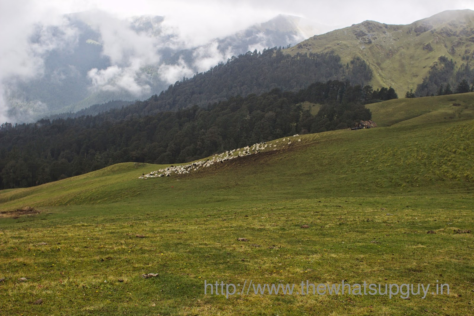 Sheeps-Roopkund-Trek-With-India-Hikes-Day-2