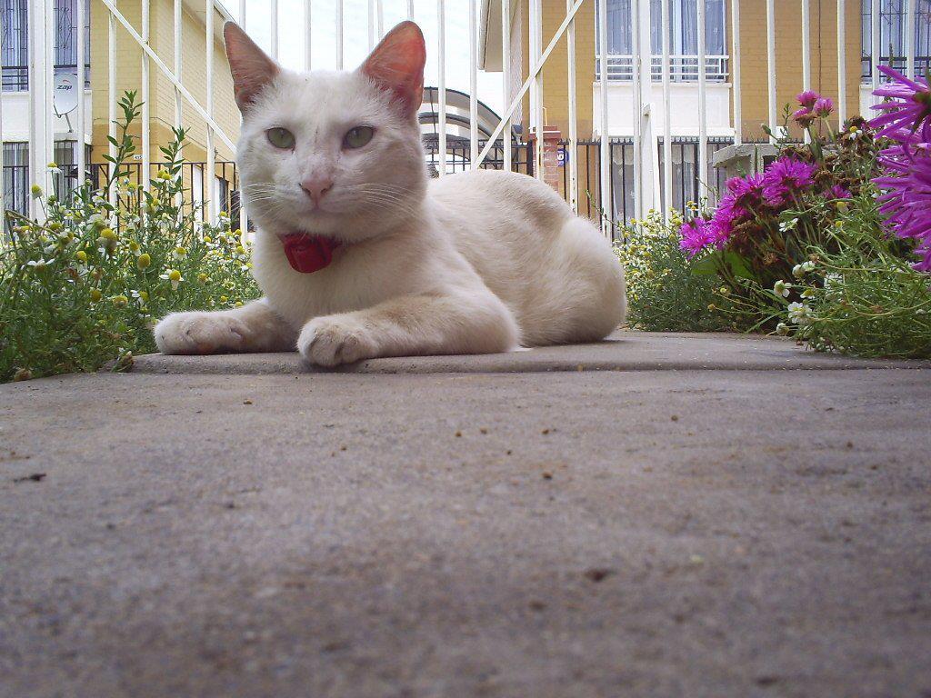 Palomo eneldo historias de un gato un momento en mi jardin for Ahuyentar gatos de mi jardin