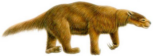 Xenathra fosil en Argentina Glossotherium