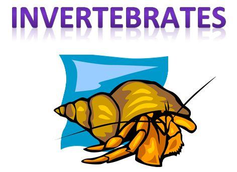 Learning Ideas - Grades K-8: Invertebrates (Animals WITHOUT Backbones ...