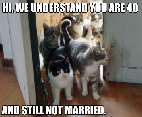 Funny Cat Woman 40 Not Married Meme - Hi, we understand you are 40 and
