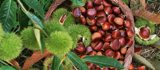 Chestnuts stewed with celery