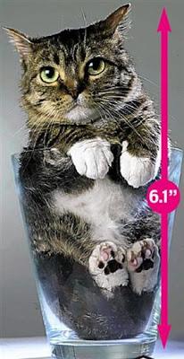 أصغر الحيوانات في العالم 03.jpg