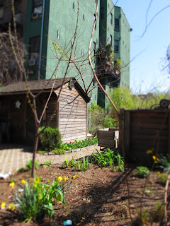 New York _Community Garden