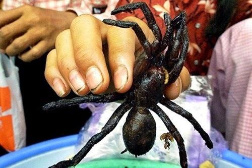Choáng với đặc sản nhện đen chiên Campuchia