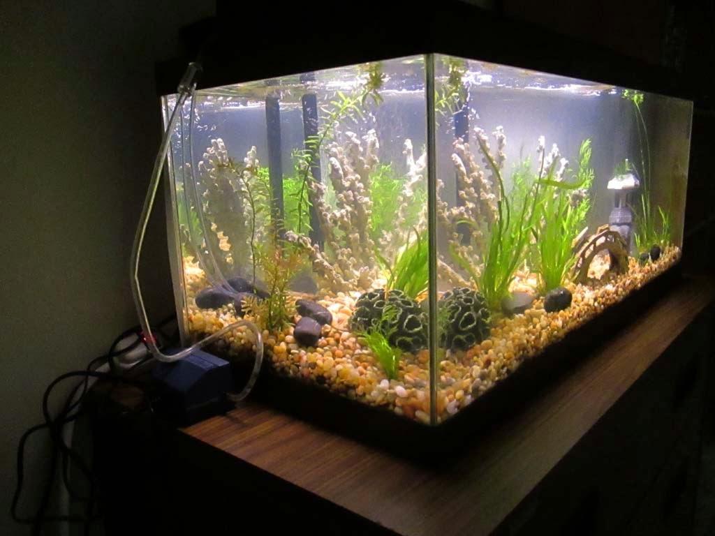 Green Jean Aquarium
