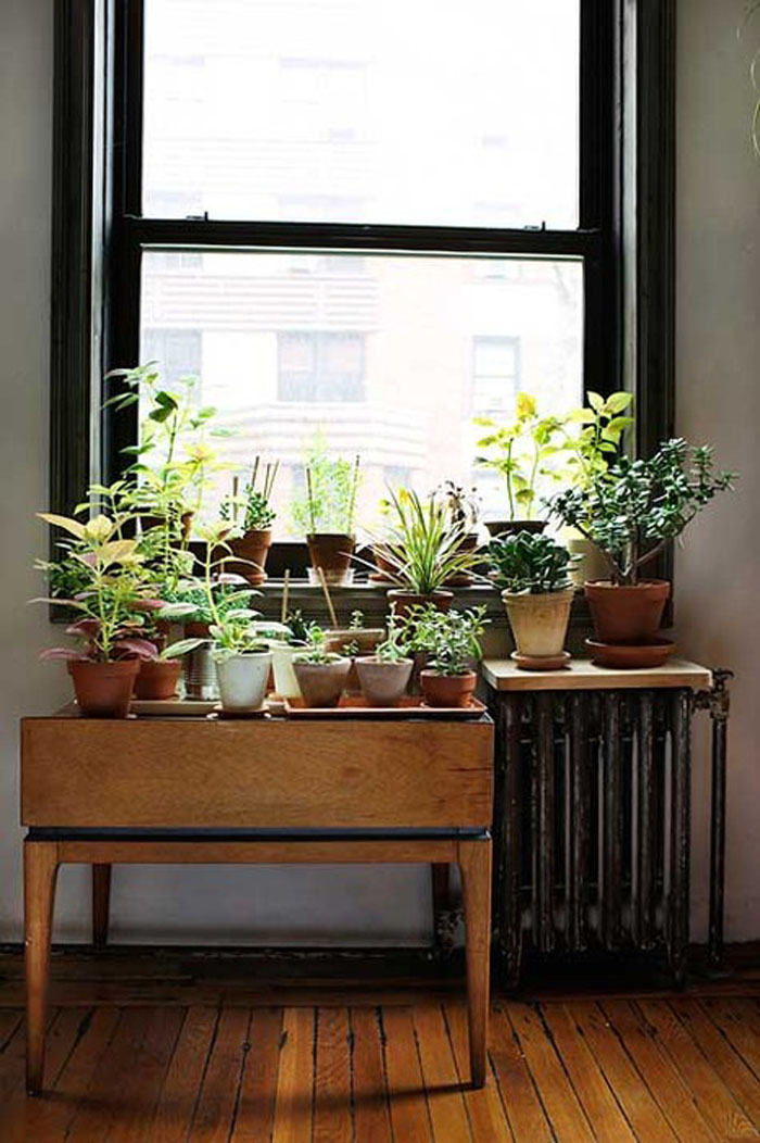 plants collection next to the window