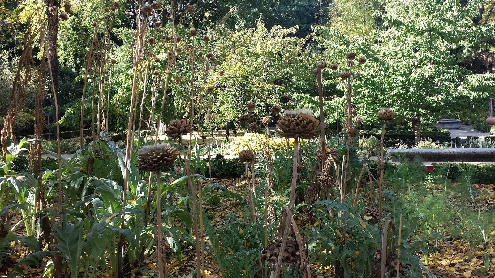 Ceip rosa luxemburgo parla excursi n al jard n bot nico for Ceip jardin botanico