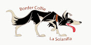 BORDER COLLIE LA SOLANILLA
