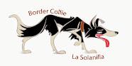 BORDER COLLIE LA SOLANILLA