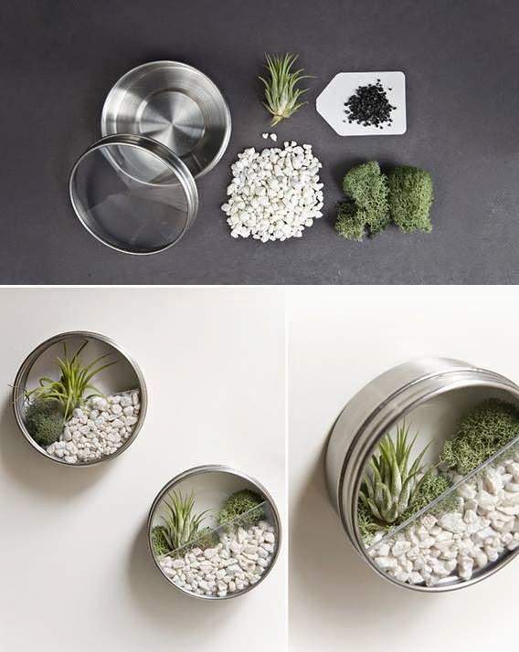 ideas for making terrariums
