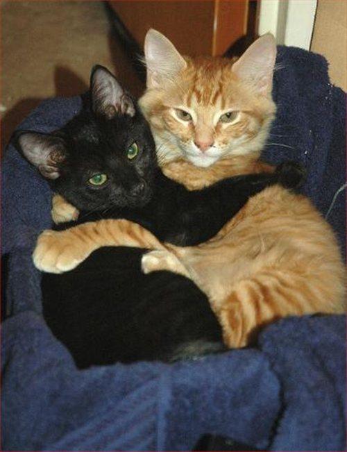 El gato varios gatos en casa - El gato en casa ...