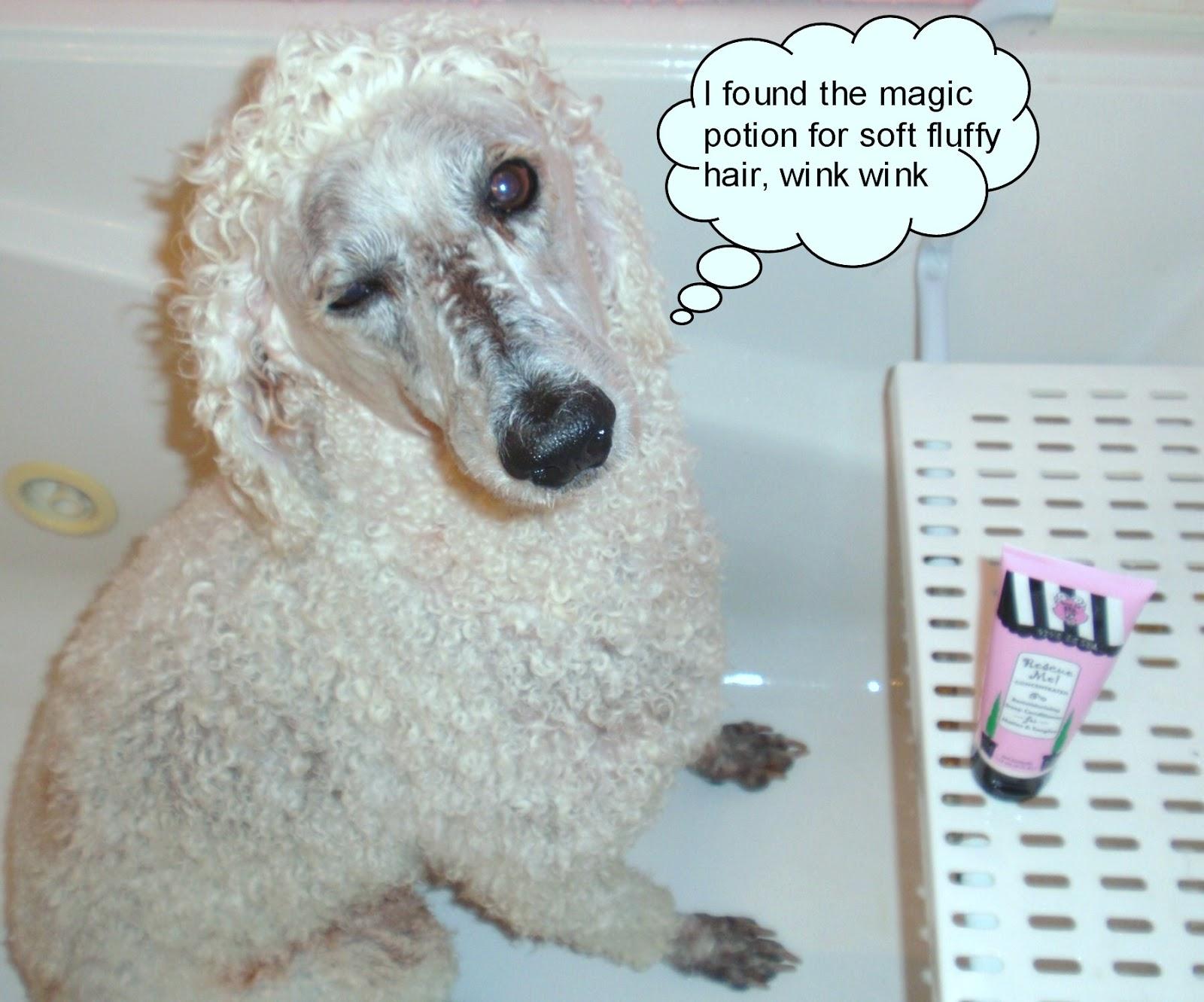 Carma Poodale in tub with Viva La Dog Spa